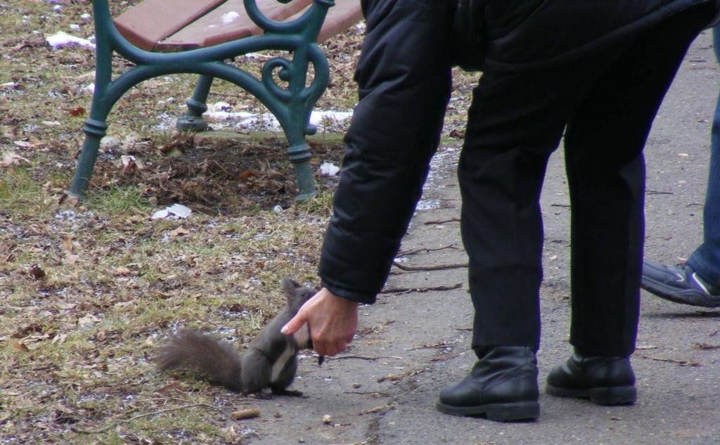 squirrelfeed